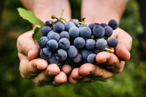 Etna Wine tour 7day